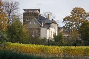 Weinberg im Herbst - blick auf die Wachtelburg