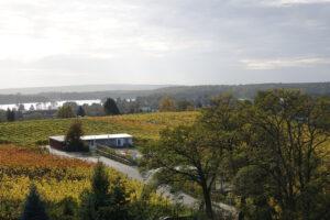 Weinberg im Herbst - Blick auf die Havel